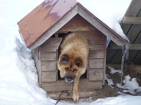犬小屋スリー03(2013.1.16)