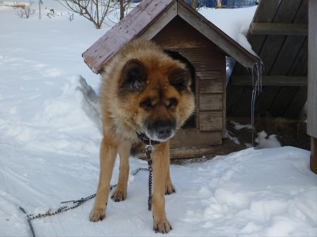 犬小屋スリー07(2013.1.16)