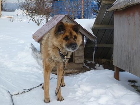 犬小屋スリー08(2013.1.16)