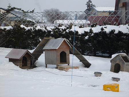 犬小屋スリー01(2013.1.17)