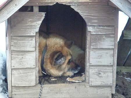 犬小屋スリー01(2013.1.21)