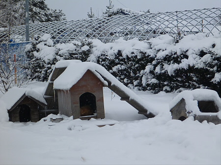犬小屋スリー01(2013.1.26)