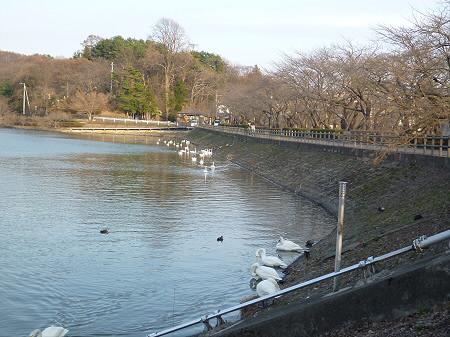高松公園の桜03(2013.4.9)