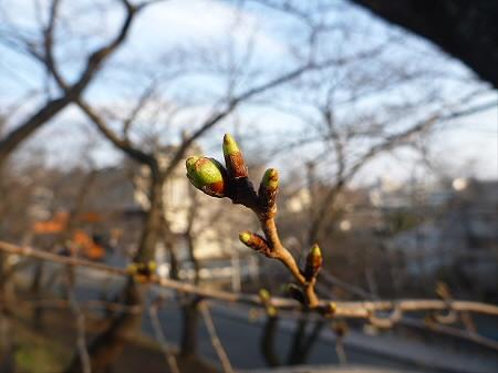 高松公園の桜06(2013.4.9)