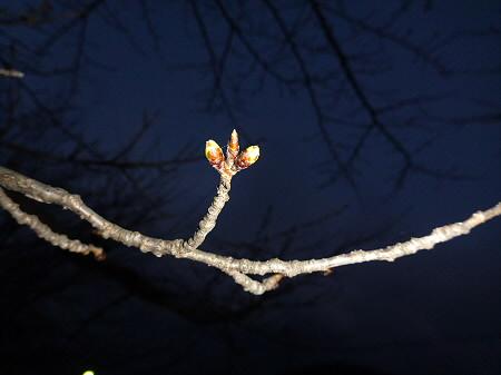 高松公園の桜09(2013.4.9)