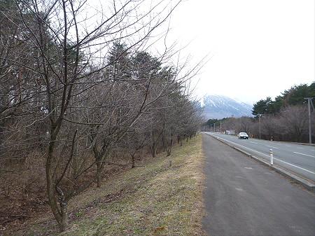 上坊牧野入口付近の桜並木06(2013.4.11)
