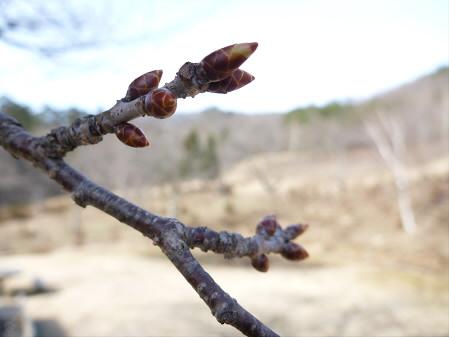 桜松公園の桜06(2013.4.16)