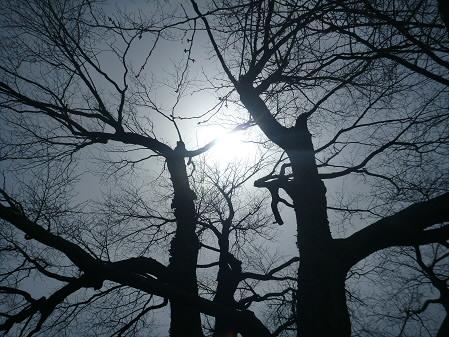 上坊牧野の一本桜05(2013.4.16)