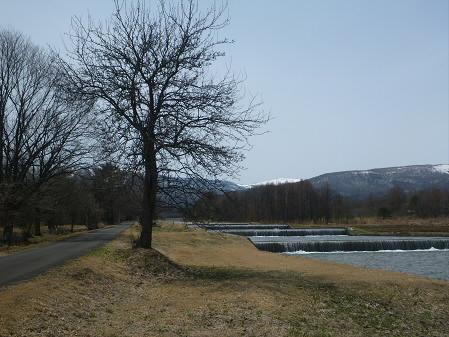 明治百年記念公園の桜05(2013.4.16)