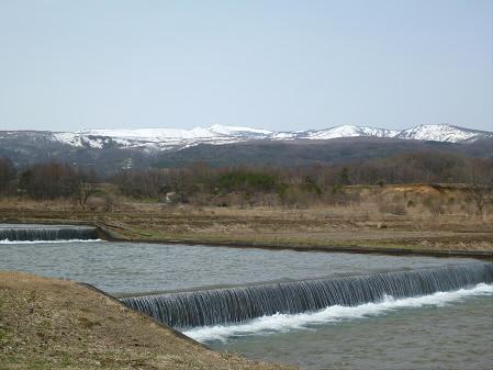 明治百年記念公園の桜06(2013.4.16)