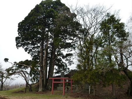 舘山公園の桜07(2013.4.19)