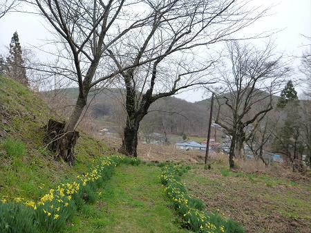 舘山公園の桜11(2013.4.19)
