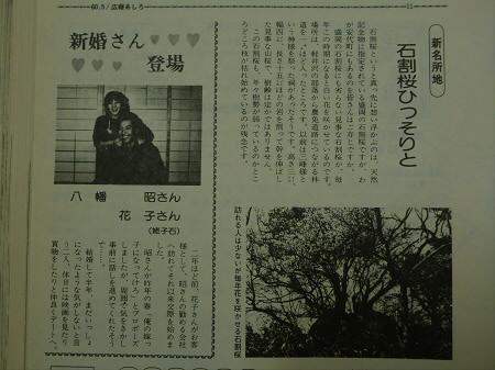 石割桜について02(2013.4.22)