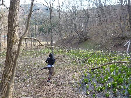 横間のミズバショウ17(2013.4.25)ジャンプ!