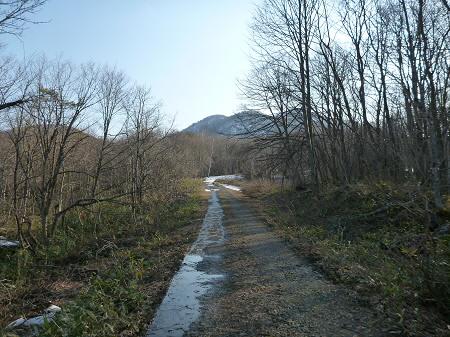 七時雨山の一本桜05(2013.4.25)