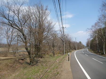 明治百年記念公園の桜01(2013.4.29)