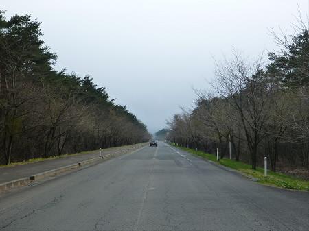 焼走り線の桜並木01(2013.5.6)