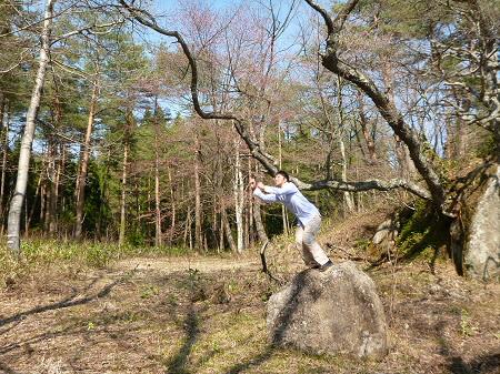 三峰山の石割桜01(2013.5.10)ジャンプ!