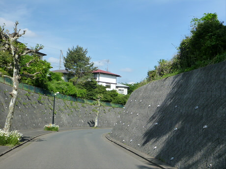 七時雨山開き01(2013.6.2)