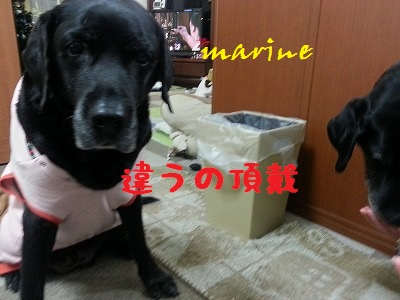 20131217marine5.jpg