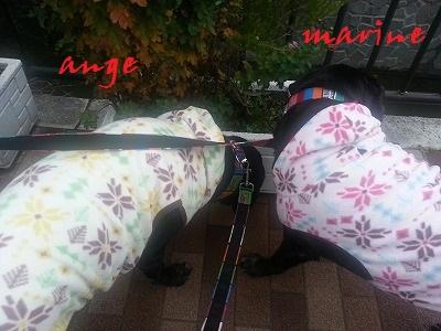 20131221marineange2.jpg