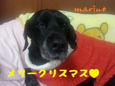 20131223marine7.jpg