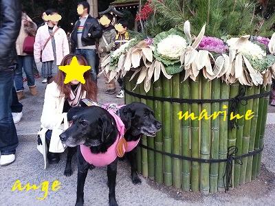 20140102marineange3.jpg