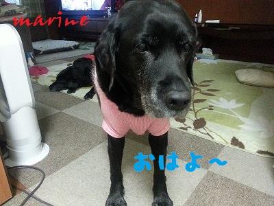 20140107marine1.jpg