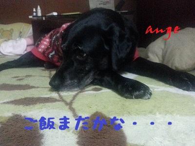 20140108ange1.jpg