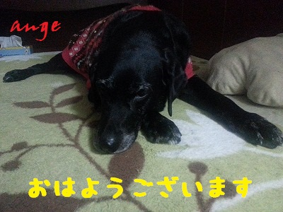 20140109ange1.jpg