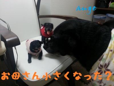 20140115ange4.jpg