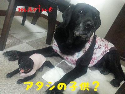 20140115marine2.jpg