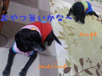 20140117marineange1.jpg