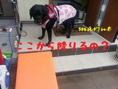 20140119marine1.jpg