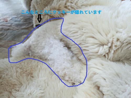 辟。鬘後け繝・く繝シ繧・convert_20130715201313