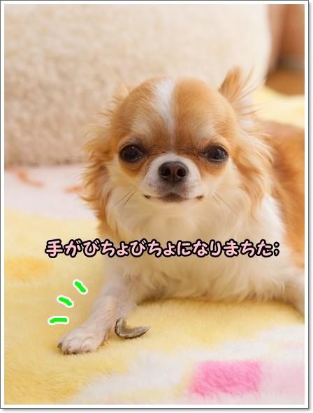 045_20130519142135.jpg
