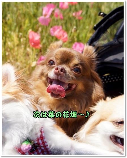 090_20130528003408.jpg