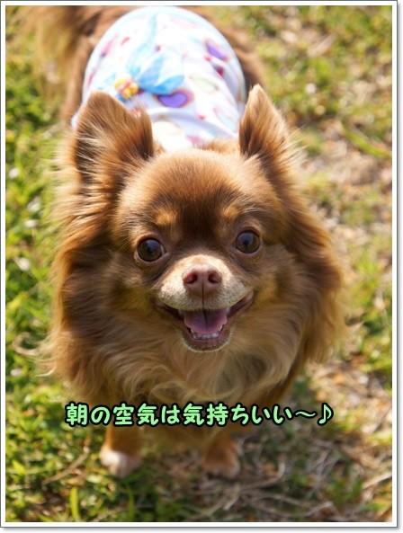 DSC08471_20130414215950.jpg