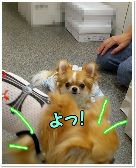 DSC_001-1.jpg