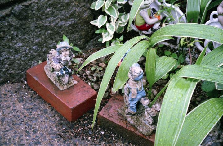 雨の午後の庭