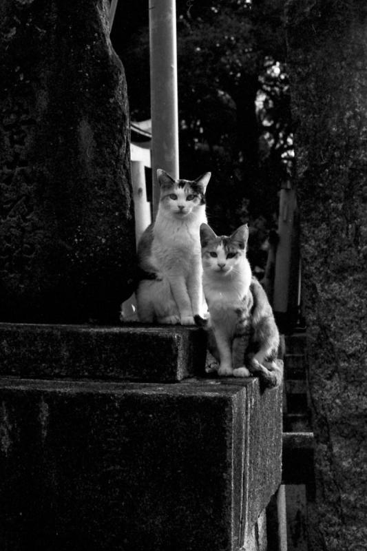裏参道の猫ズ