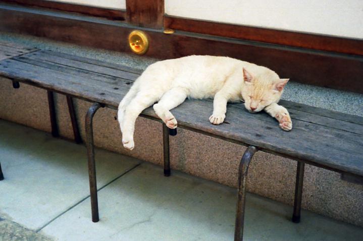 藤森神社の猫02