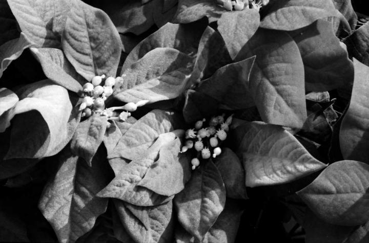ホテルの庭の花01