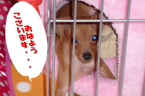 cyoko001.jpg