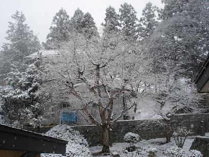 3月31日雪