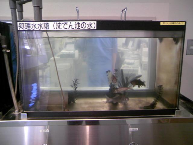 浄水場の生物による水質検査