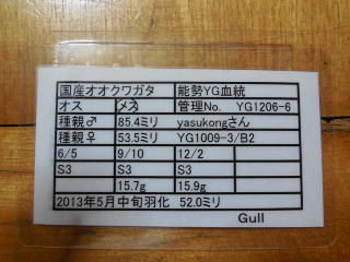 ♀520 Gull様 管理表