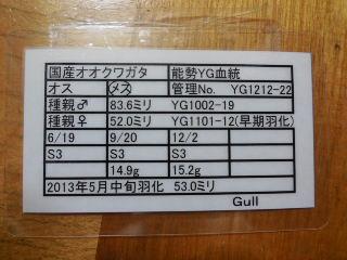 ♀530 Gull様 管理表