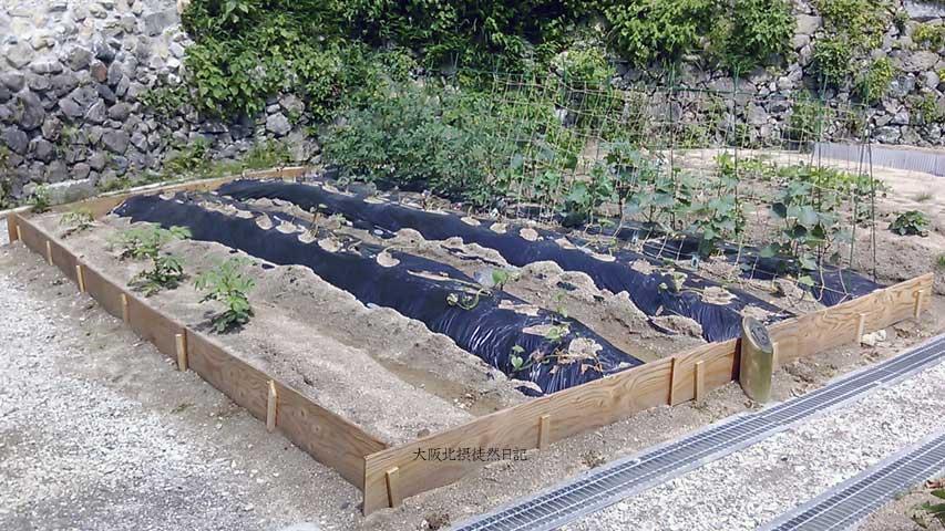20130531_ジャガイモの土寄せ