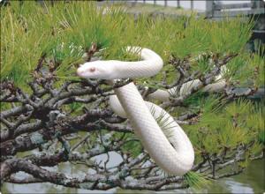 1月1日 白蛇2
